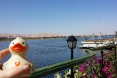 travel-duck-luxor-12