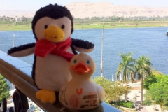 travel-duck-luxor-23