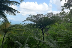19.-Regenwald-bei-Cape-Tribulation